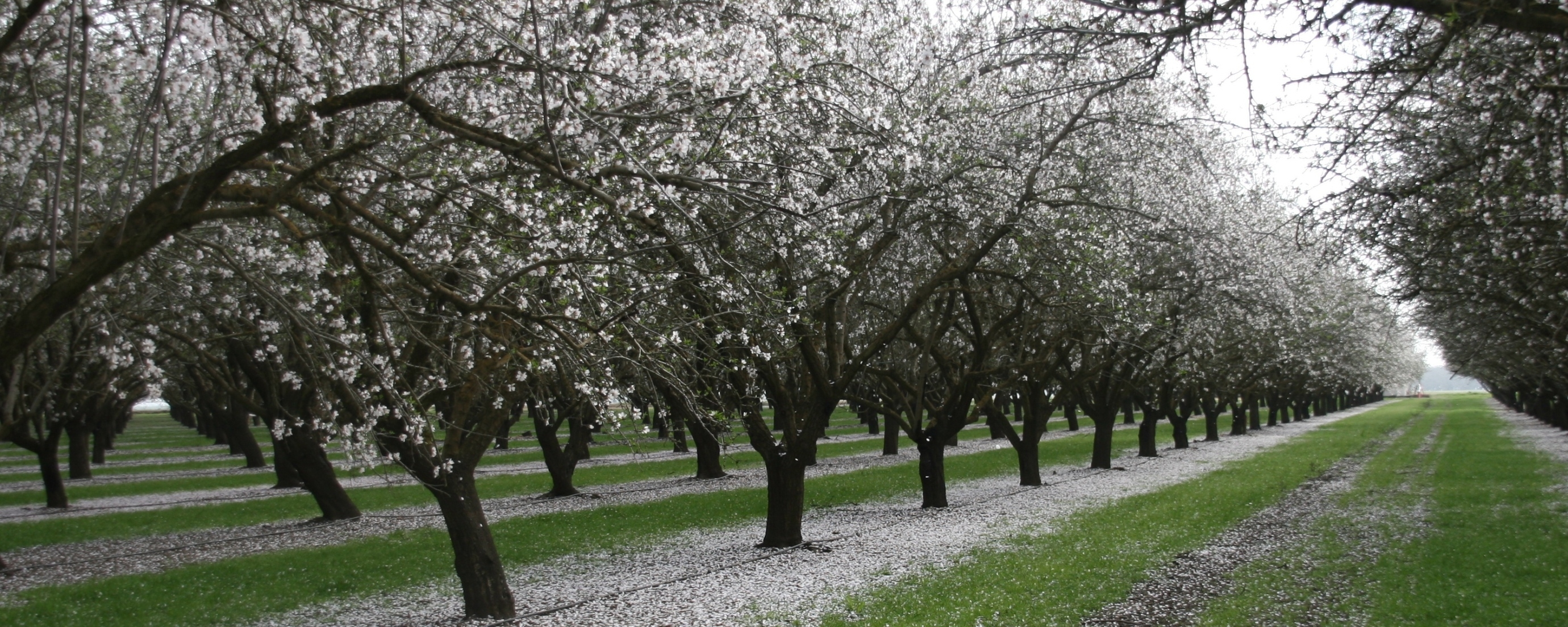 Family - owned almond farm